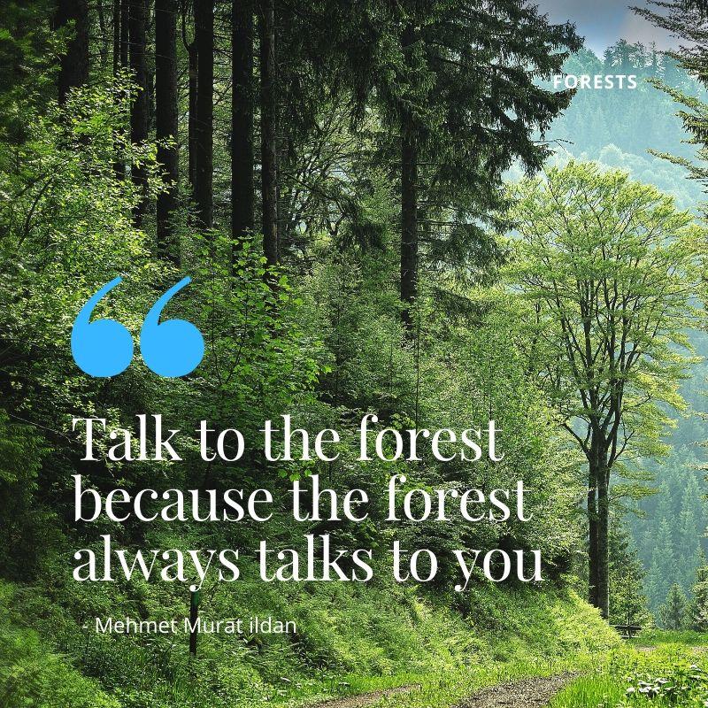 Kenya's Forests