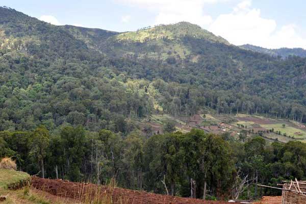 Kibiri Forest in Vihiga County
