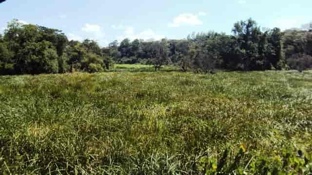 Kingwal Wetland in Nandi County