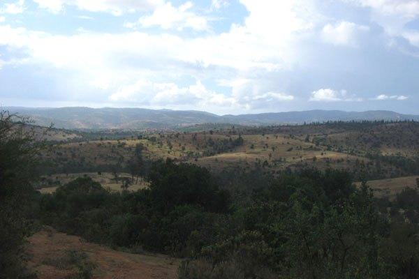 Kirisia Forest in Samburu County. Image courtesy of Nation Media Group