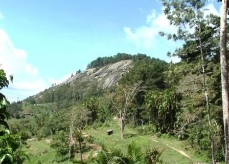 Ngangao Forest in Taita Hills - Taita Taveta County