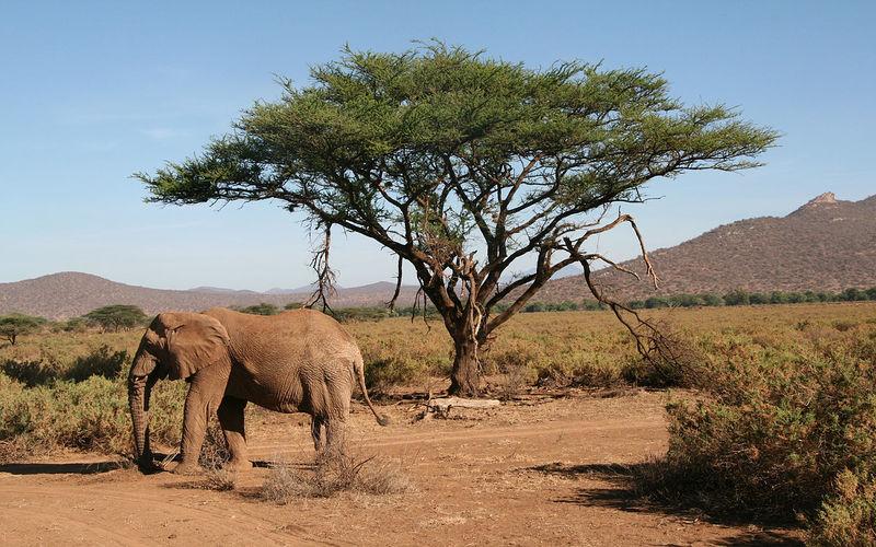 Samburu National Reserve in Samburu County