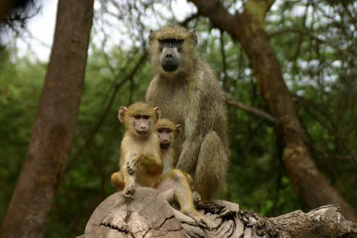 Tana Primate National Reserve