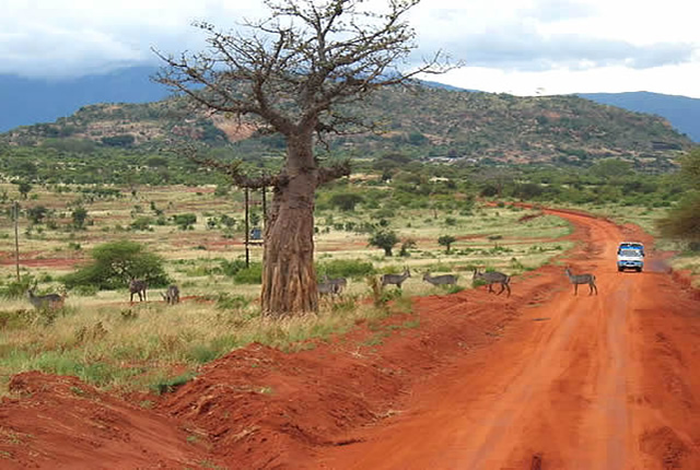 Tsavo East National Park. Image Courtesy of Frate Tours