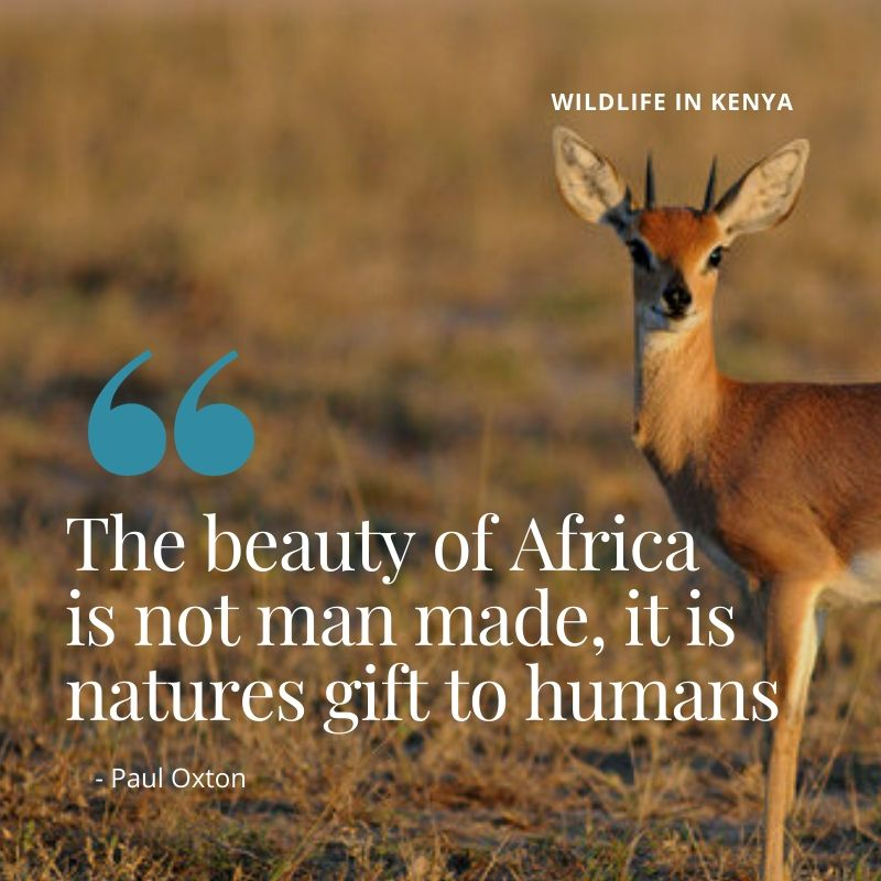 "Travel Quote - ""The beauty of Africa is not man made, it is nature's gift to humanity"" - Paul Oxton. A Guide to Wildlife in Kenya"