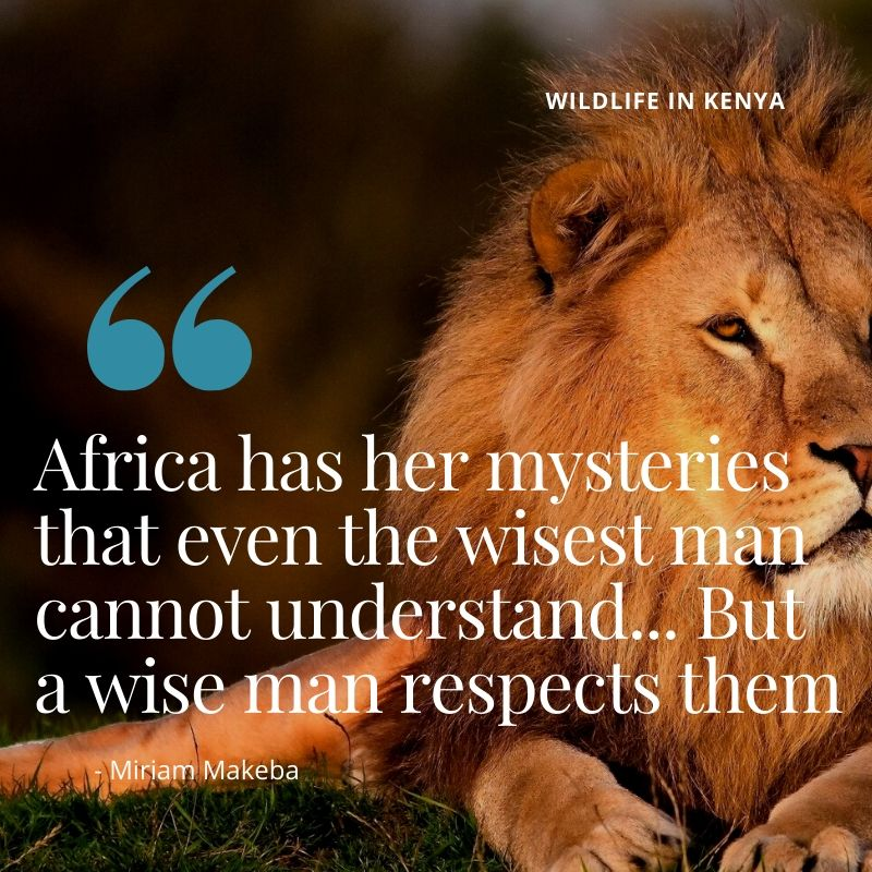 "Travel Quote - ""Africa has her mysteries and even a wise man cannot understand them. But a wise man respects them"" - Miriam Makeba. A Guide to Wildlife in Kenya"
