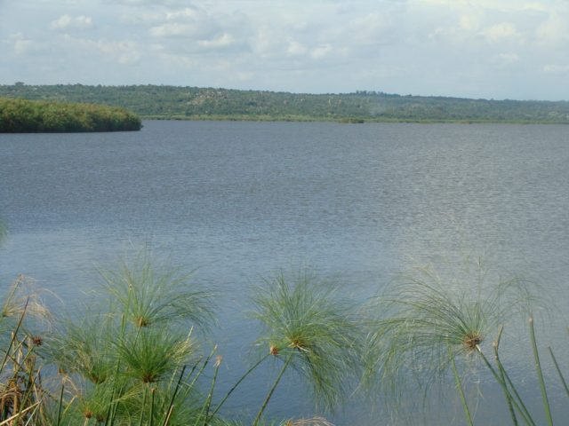 Yala Swamp Wetland in Kenya