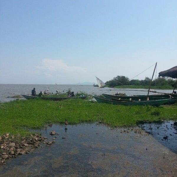 Nyando (Kusa) Wetland. Image courtesy of Foursquare