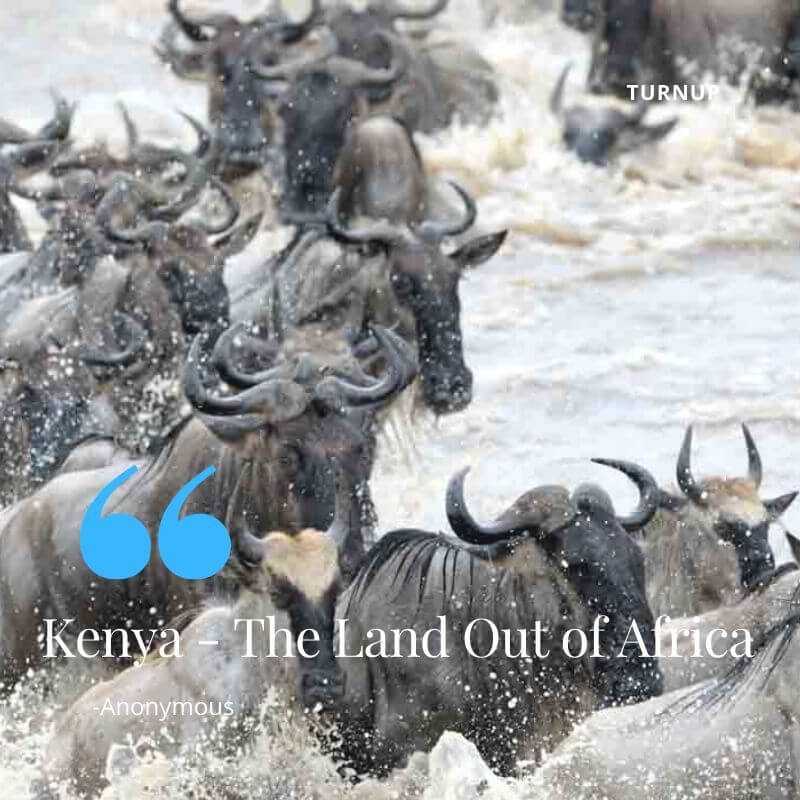 Kenya - The Land Out of Africa