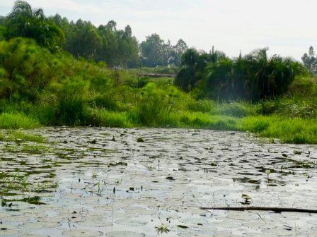 Sio Siteki Wetland. Image courtesy of Talk Africa