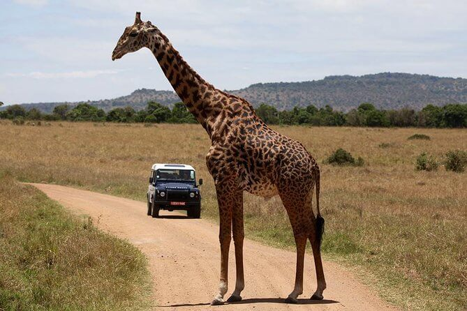 Ol Pejeta Wildlife Conservancy - A Look into Kenya Safari Heritage