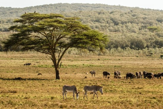 Oserengoni Wildlife Conservancy  - A Look into Kenya Safari Heritage