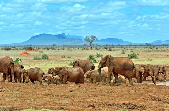 Tsavo West National Park. Image courtesy of Trip Advisor