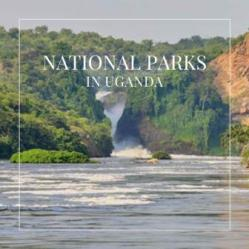 Discover the National Parks in Uganda