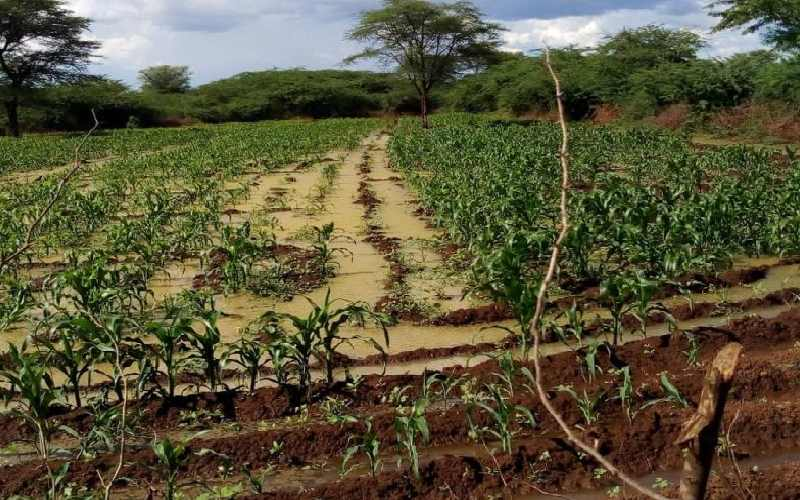 Section of Perkerra Irrigation Scheme in Baringo. Image Courtesy of SG