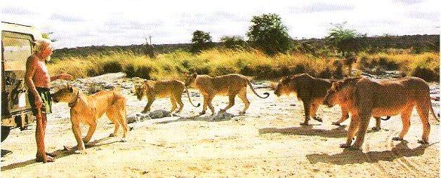 George Damson in his heydays at Kora National Park