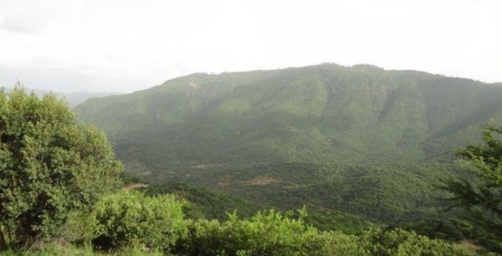 Kirisia Forest in Samburu County. Image Courtesy of Ministry of Forestry