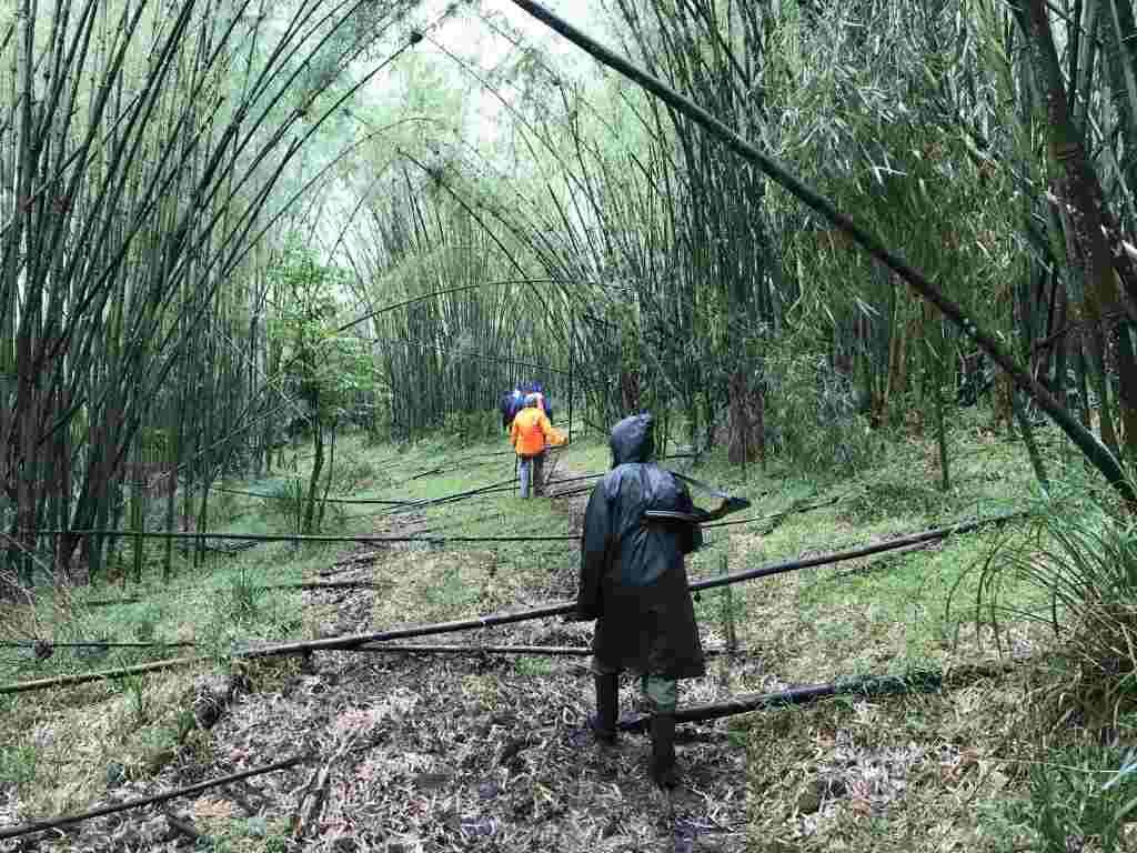 Bamboo Canopy Path at Njigari Forest. Image Courtesy of Hike Maniak