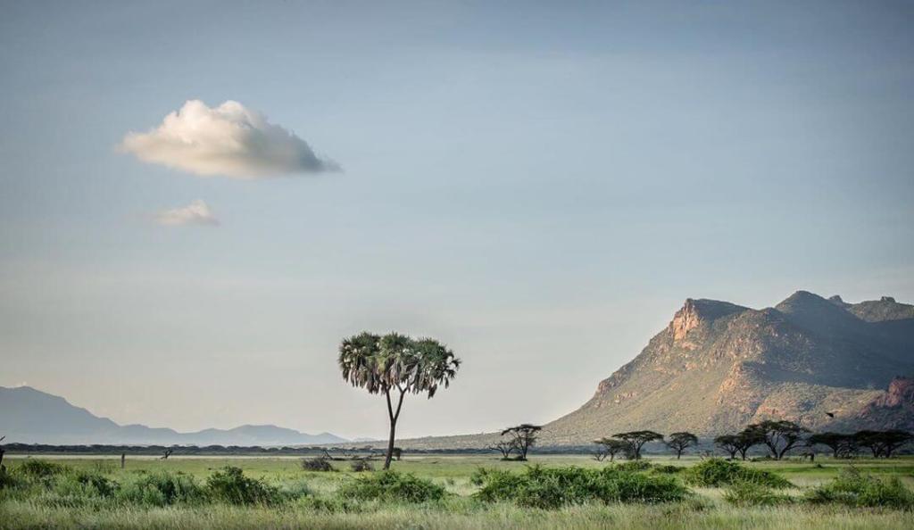 Inside Shaba National Reserve. Image Courtesy of Ever Wild Africa
