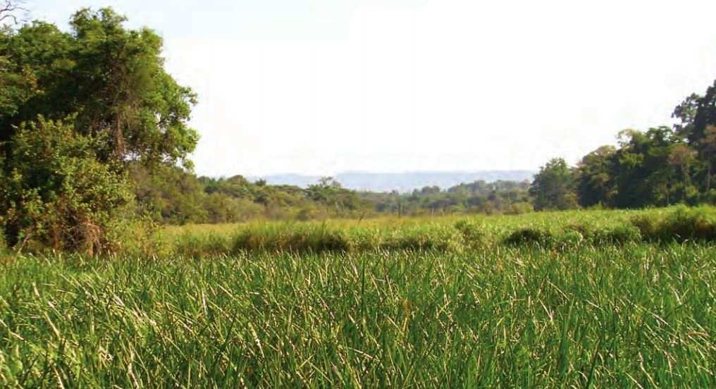 Section of Kingwal Wetland. Image Courtesy of World Bank Documents
